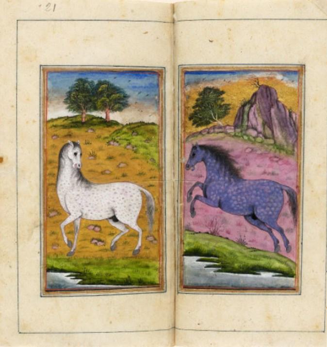 Traité d'hippiatrie, Inde, 18e siècle (BNF) : représentations de différentes races de chevaux et de leurs robes